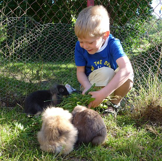 The bunnies in Katthult love dandelion leaves